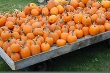 Pumpkin Patch / by Nicki Rainey