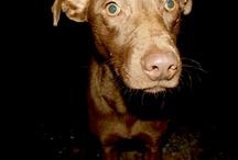 Cachorros vira lata / by Sandra Leone