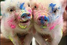 Cute mini pigs / by Jazett Martinez