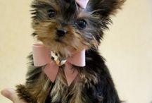 Puppies & Kitties / by Chalah Lykes