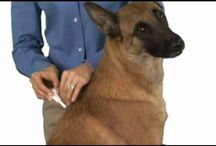 PetMeds Product Demos / Not sure how to use your pet meds? Check out these pet medication product demos.  / by PetMeds