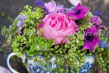 flowers / by Kathy Carroll Karpowicz