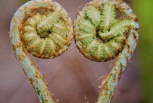 Ferns and Art / Beautiful pictures and prints about ferns / by Rui Soares