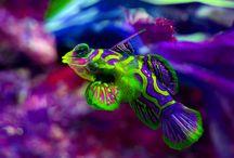 Fishspirartions / by Nicole Wildman