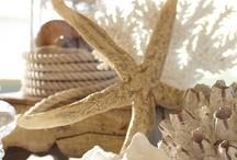 Seashells and Sandcastles / by Linda Horne