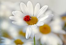 fabulous flowers / by Karen Acton