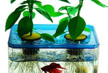 AQUAPONICS / by Michelle Wilcox