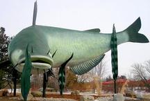Fun Fishing Pics / by World Fishing Network