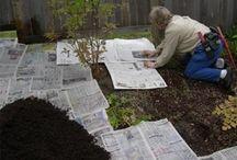 Gardening ideas  / by Frankie Hruza