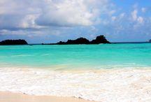 Galapagos / our honeymoon / by Molly Corrado