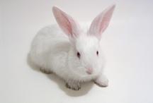 Easter / Bunnies /Coelhos / by Eleonora Lins