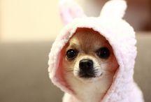 Pups. / by Courtney Jones