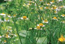 Garden - herbs / by Kathi OakHillHomestead
