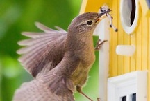 Birdhouses / by Debbie Harris