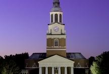 Beautiful Campus Scenes / by Church Hill Classics