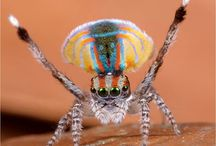 Spiders / Stranger spiders or spider related stuff. / by Cool Like
