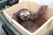 Sloth-mania / by Lonneke van Oostveen
