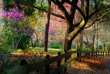 Favorite Places & Spaces / by Susan Foulks