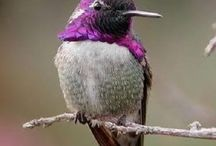 Birds / by Rhonda Parker