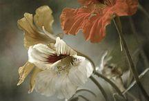 Flowers/Plants / by Alex Espino