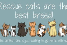 we like all kinds of cats / by Anjellicle Cats