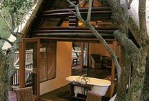 Tropical Tree Housing / by Jamie Riley