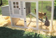Poultry products & plans / For my chicken ideas / by Lisa Hogue