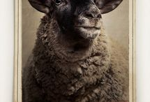 Sheep / by Suzette Brown