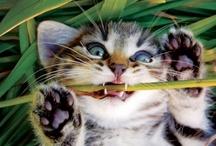 It's a Cat's World / by Kathy McManus