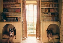 Dogs + Interior Design / by DogVacay