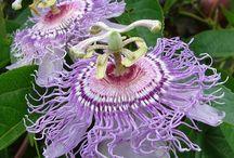 Flowers (Unusual!) / by Amanda Roman