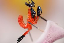 Insects / public / by Sunny Clark