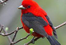 Bird Watcher! / by Barbara Montag