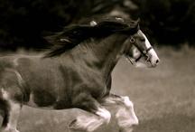 animals I love / by Sue Hart-Somerville