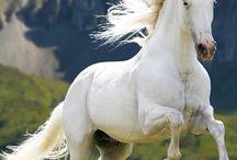 caballos,una pasión / by MaElena Carpio