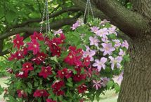 The Hanging Baskets of Seafield Road / by Lynn Gill