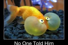 Funny fish  / by Miella Sigouin