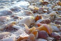 Beach Bum :) / by Chantele Penny