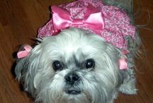 PUPPY DOG LOVE ❤❤ / I LOVE DOGS!! I HAVE 3 SHIH TZU'S AND A POMERANAN! LOVE LOVE LOVE EM!❤ / by ❤ Babette ❤