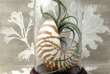 Terrariums & Air Plant  Displays / lovely an creative ideas for growing beautiful plant in small spaces / by Jacqueline Roth