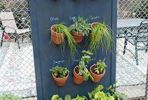 Gardening / by Celine Kooiman