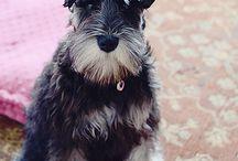 Puppy Love / by Melinda Brown