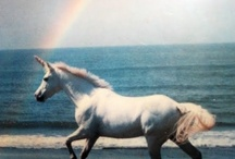 unicorn / by Clavicule. Virgule