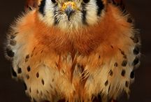 fluffy flying friends / by Deb Ovesen