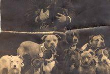 Doggies / by Marlene Koncewicz