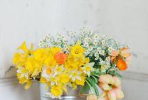 Spring! / by Kristina Meltzer