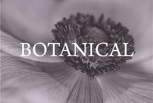 botanical / Flora & botanical beauty / by Left on Houston