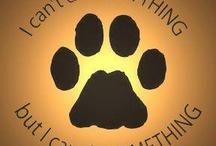 Lend A Paw / by MCAS Pets