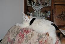 My Cat Callie / Love My Callie Cat ♥♥♥♥ / by Alice Bradway