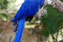 Birds! / by Sarah Bojko